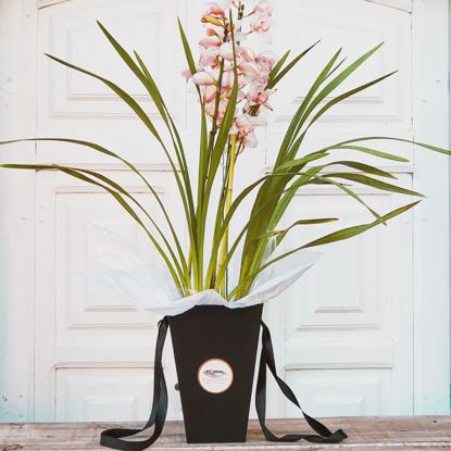 Imagem de Orquídea Black Box