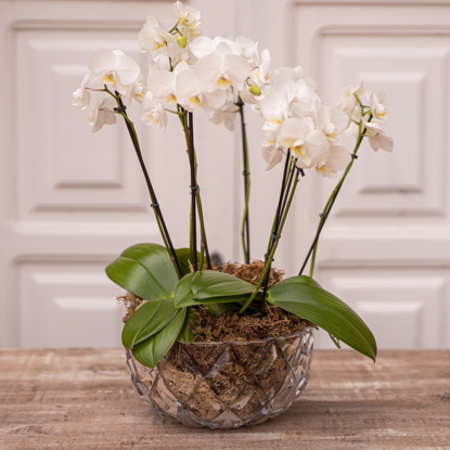 Imagem de Bacia de Orquídeas